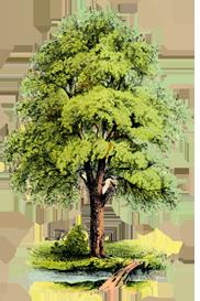 arbol2-deco-nature